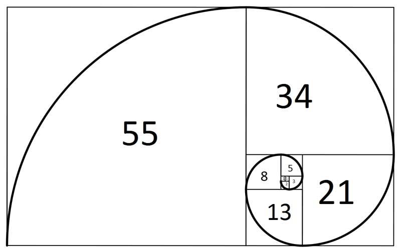 De Fibonacci reeks vormt een prachtige spiraal